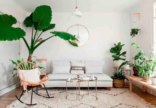 Une sélection de 10 plantes d'intérieur faciles à entretenir