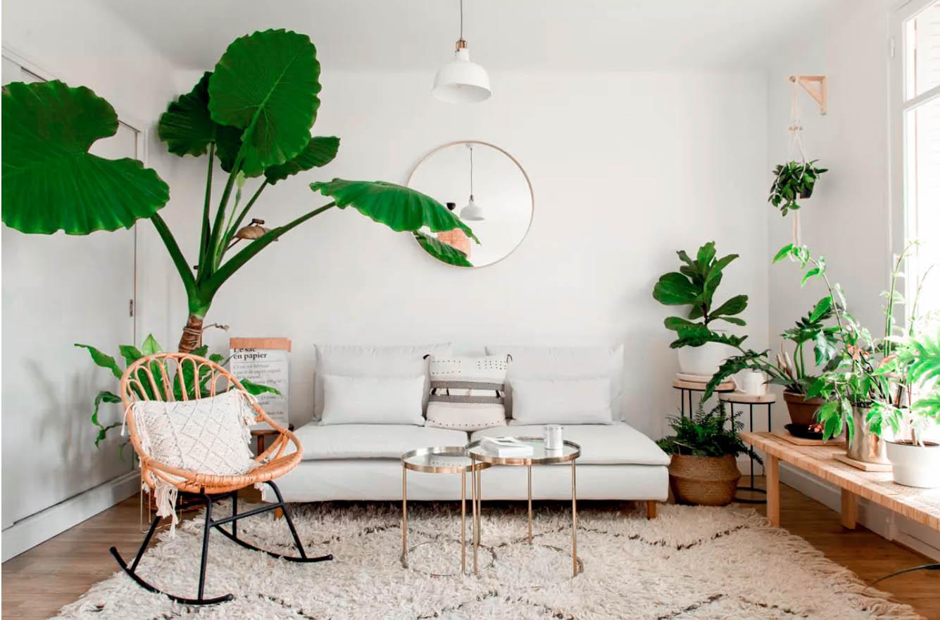 sélection de plantes d'intérieur faciles d'entretien et qui ne meurent pas - blog déco inside my home